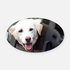 Dog Smile Oval Car Magnet