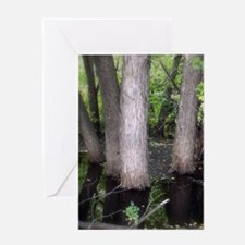Pond Greeting Cards