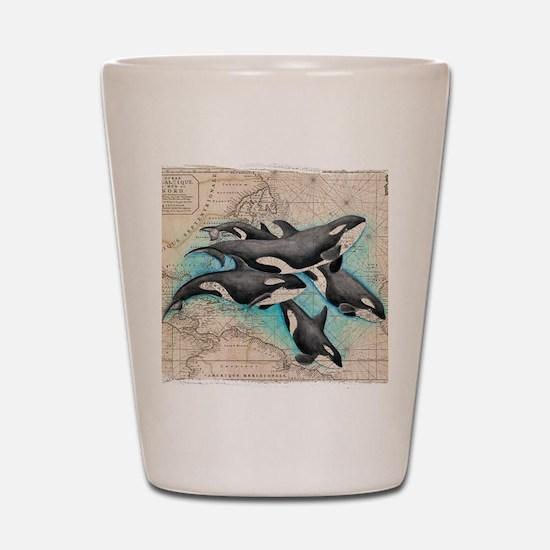 Cute Orca Shot Glass