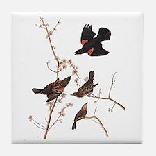 Red-Winged Starling Vintage Audubon Tile Coaster
