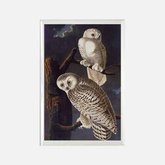 White Snowy Owls Vintage Audubon Wildlife Magnets