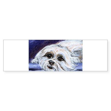 adorable MALTESE portrait Bumper Sticker