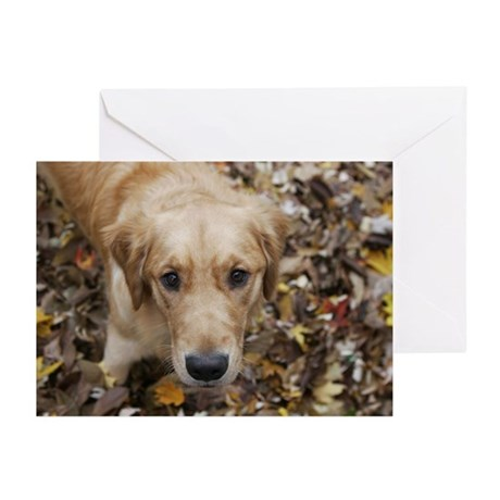 Innocent Golden Pup Greeting Cards (Pk of 10)