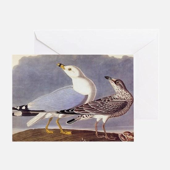 Common Sea Gull Vintage Audubon Birds Greeting Car