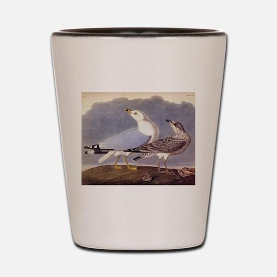 Common Sea Gull Vintage Audubon Birds Shot Glass