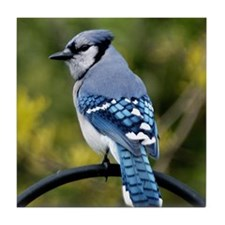 Blue Jay Tile Coaster