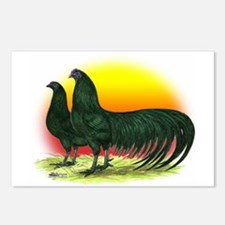 Sumatra Game Fowl Postcards (Package of 8)