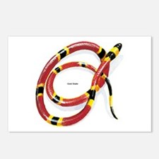 Coral Snake Postcards (Package of 8)