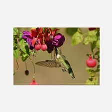 Hummer On Fuchsia Magnets