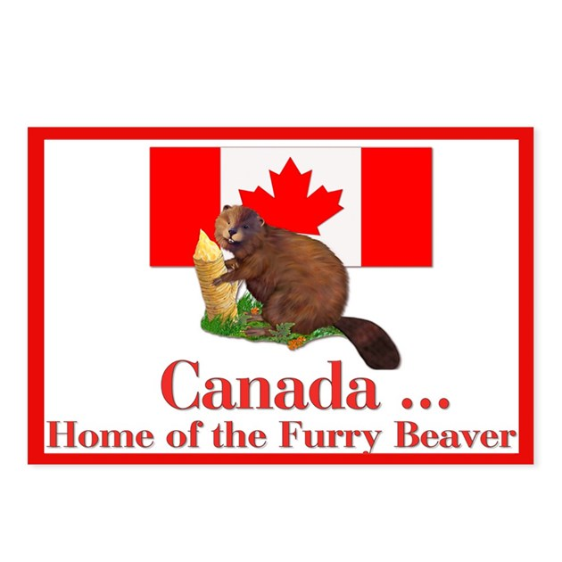 Canada Beaver Home Postcards Package Of 8 By Spicetree