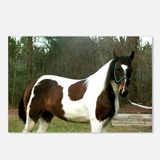 Paint Horse Photograph Postcards (Package of 8)