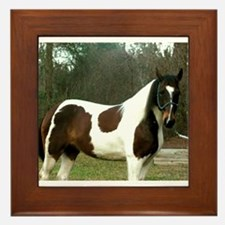 Paint Horse Photograph Framed Tile