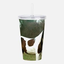 Paint Horse Photograph Acrylic Double-wall Tumbler
