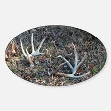 Big shed antlers Oval Decal