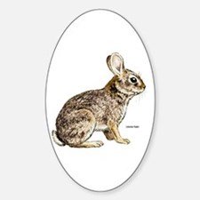 Cottontail Rabbit Oval Decal