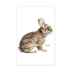Cottontail Rabbit Posters