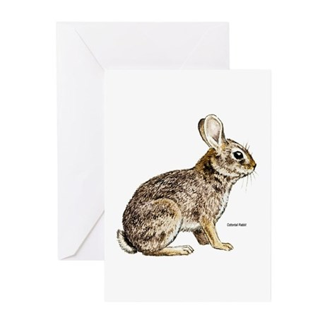 Cottontail Rabbit Greeting Cards (Pk of 10)