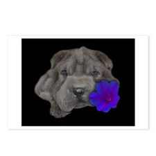 Cute Black chinese shar pei Postcards (Package of 8)