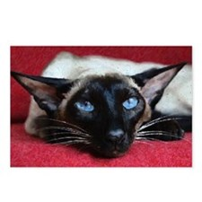 Seal Siamese Postcards (Package of 8)