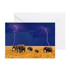 Cool 2008 Greeting Cards (Pk of 20)