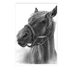 Ranger, Arabian-Tennessee Walking Horse Postcards
