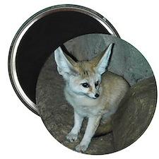 Fennec Fox Magnet