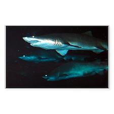 Sharks Rectangle Decal