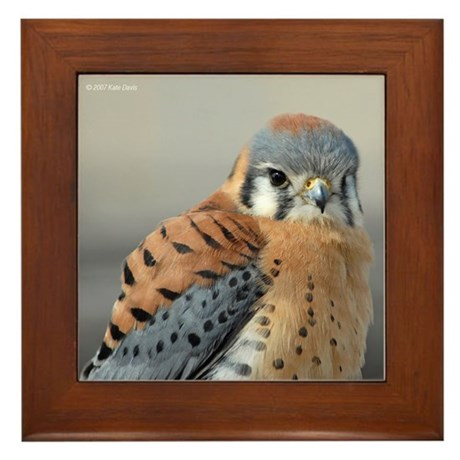 K-801 American Kestrel on Framed Tile