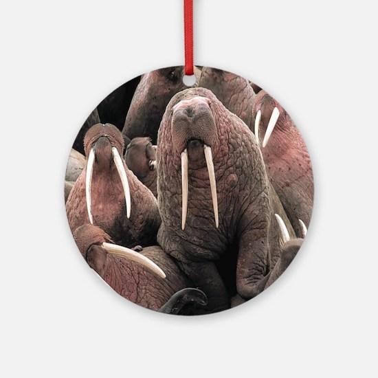 Walrus Round Ornament