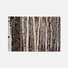 Aspen Trees Magnets
