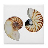 Chambered nautilus Coasters