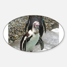 Penguin Oval Decal