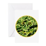 Hosta Smiley Face Greeting Cards (Pk of 20)