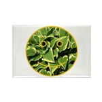 Hosta Smiley Face Rectangle Magnet (100 pack)