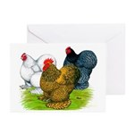 Assorted Cochins Greeting Cards (Pk of 20)