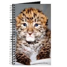 Amur Leopard cub Journal