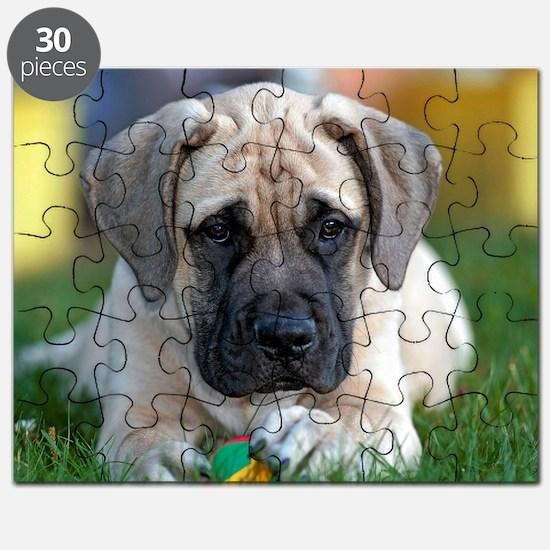 English Mastiff puppy Puzzle