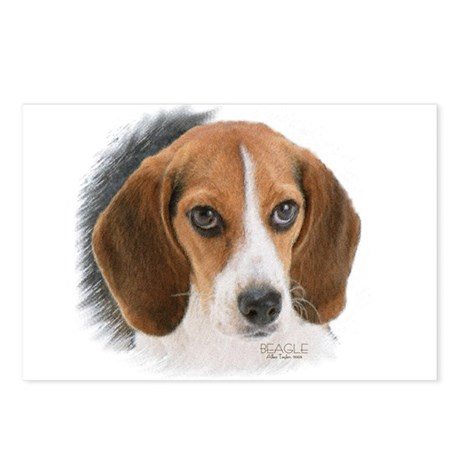 Beagle Close Up Postcards (package Of 8)