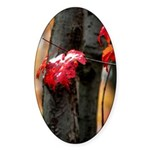 Red Leaf Oval Sticker