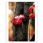 Red Leaf Small Poster