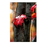 Red Leaf Postcards (Package of 8)