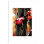 Red Leaf Large Poster