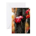 Red Leaf Greeting Cards (Pk of 10)