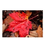 Pooled Water Leaf Postcards (Package of 8)