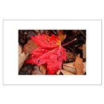 Pooled Water Leaf Large Poster