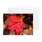 Pooled Water Leaf Greeting Cards (Pk of 10)