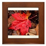 Pooled Water Leaf Framed Tile