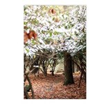 Enchanted Forest Postcards (Package of 8)