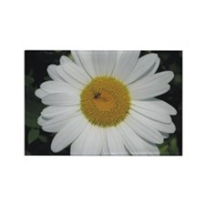 Daisy & Bee<br> Rectangle Magnet