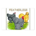 Feather-leg Trio Postcards (Package of 8)